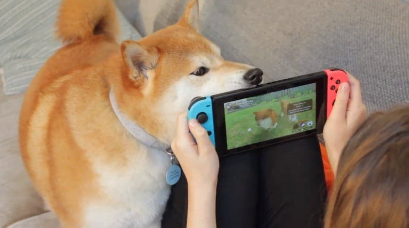 Ronda de tráilers de Nintendo Switch: Guilty Gear XX Accent Core Plus R, Little Friends: Dogs & Cats, Ninja Box y Fishing Spirits