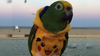 Ya puedes comprar una sudadera con capucha de Pikachu para tu loro