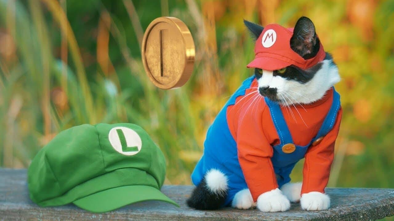 Este vídeo nos muestra cómo sería Super Mario Bros. si estuviera protagonizado por un gato real